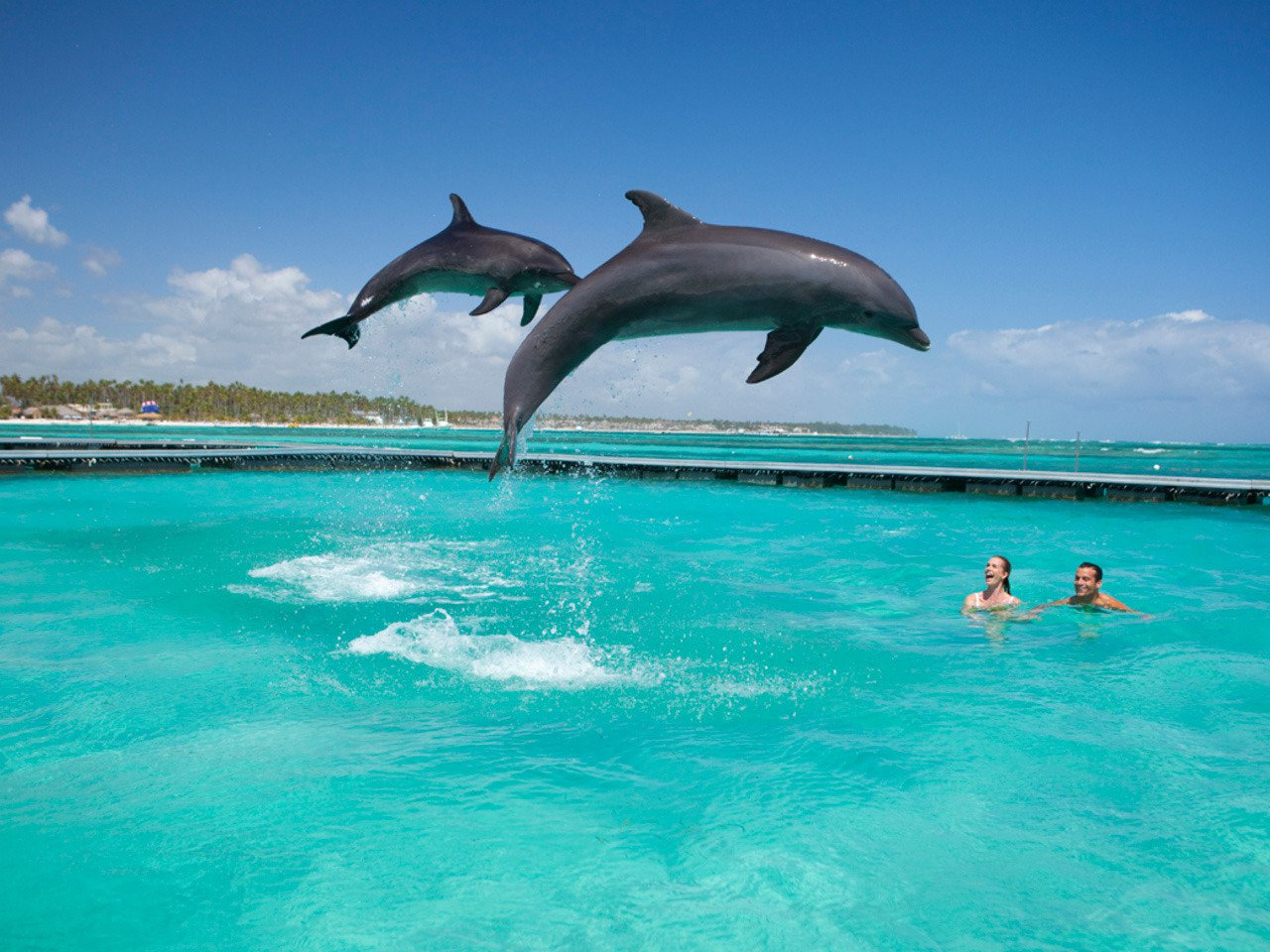 20090328_dolphin_island_0102