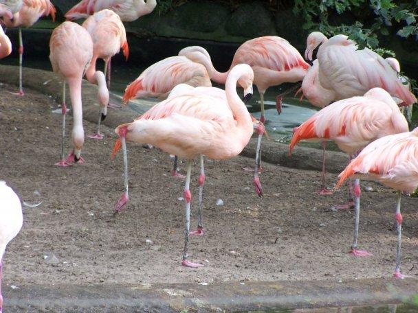 berliner-zoo