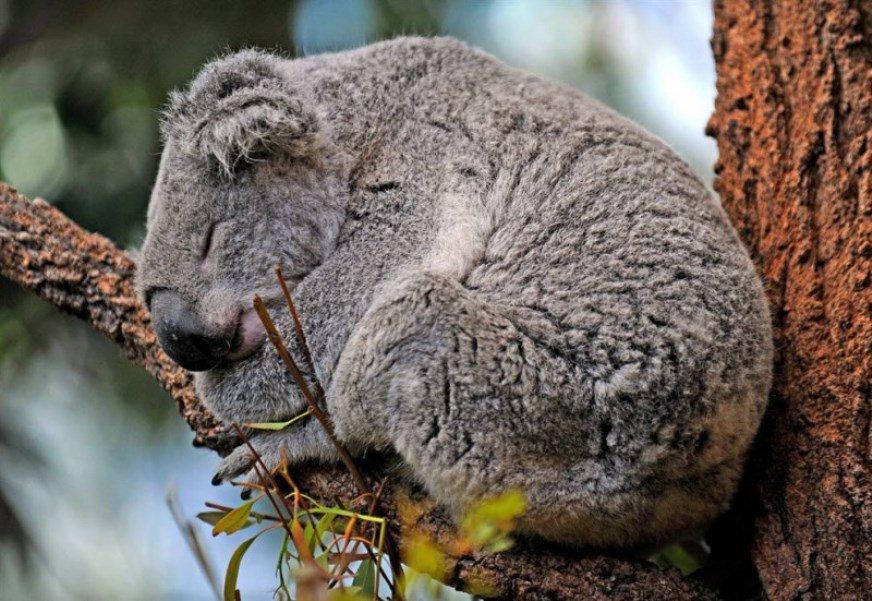 – эндемичные животные и растения