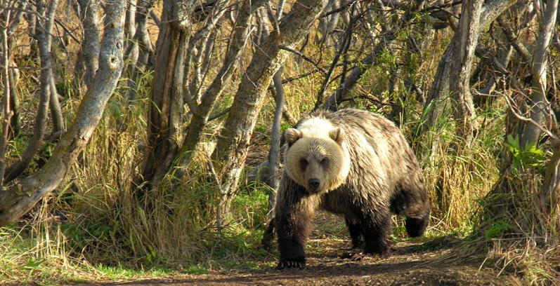Medved-2-www.kamchatsky-krai.ru