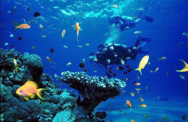 Подводный мир. Эйлат