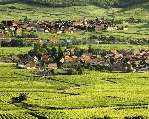 alsacia-ruta-vinos